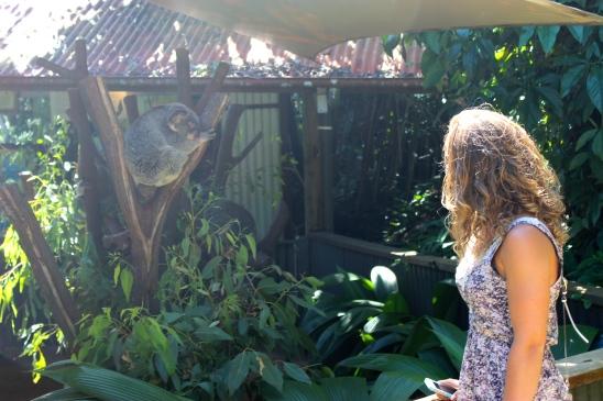 Kuranda Koala Garden